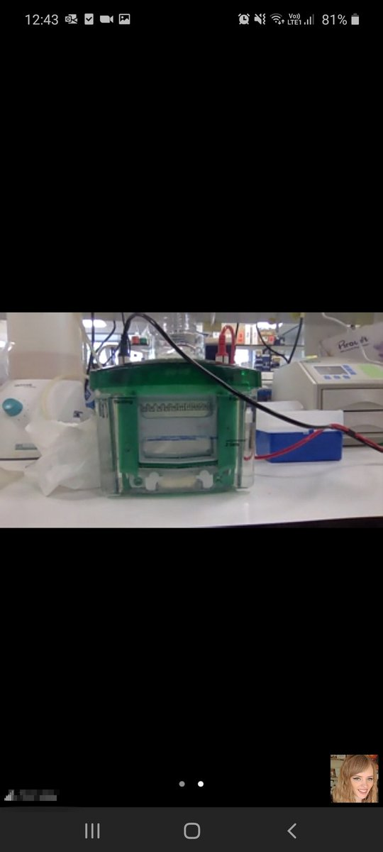 I can't thank @AcademicChatter enough for this tip!  Zoom video call of my western blot while I went and had lunch without a single worry of it over running 😍 https://t.co/Y0IFyQh95u