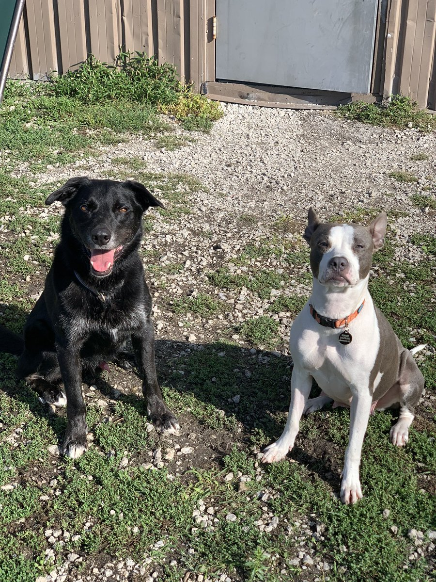 Sanctuary or bust.  Grover and possibly Sue Ellen are heading to Texas.  Check out https://t.co/6c96lC8H5q for more details and ways you can help. https://t.co/EliPsSmUfv