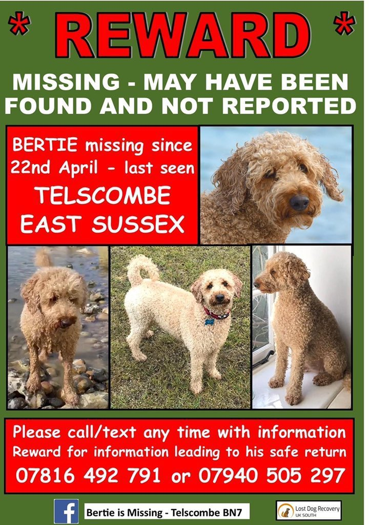 We will continue our search for Bertie, even though it wasn't the outcome we dreamt of 🍀🤞 There are going to be a lot of dogs finally reunited with their owners over the next few days❤️ #FindBertie https://t.co/CzGd04fIm4