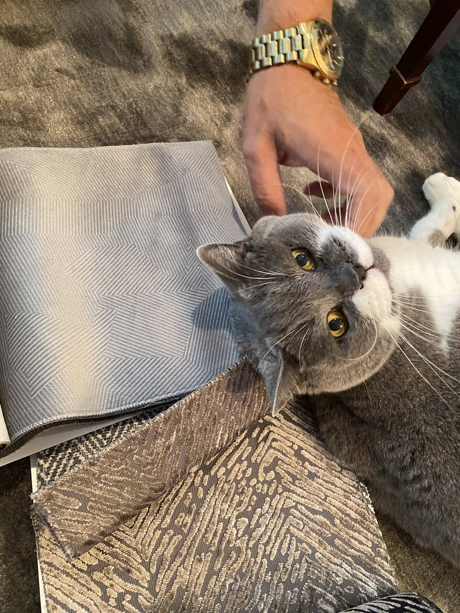 Doing my Graydon Manor home decor duties today. Consulting Staff on swatches and choosing which fabric & colour match moi best. Cause Dey know my floofy self going to be on dos chairs 😹😹😹😹😹 #CatsOfTwitter #tunatuesday https://t.co/lJg3qatIL0