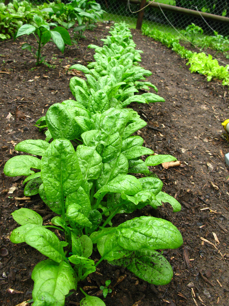 Replace iceberg lettuce with raw #spinach. Full of vitamin A, it's guaranteed to spice up your salad AND health! https://t.co/edwqKNXV4w
