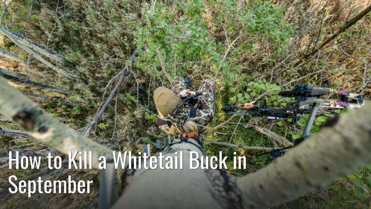 Besides the rut, right now is arguably the easiest time to kill a big buck. Here's exactly how to do it. #meateater #fueledbynature