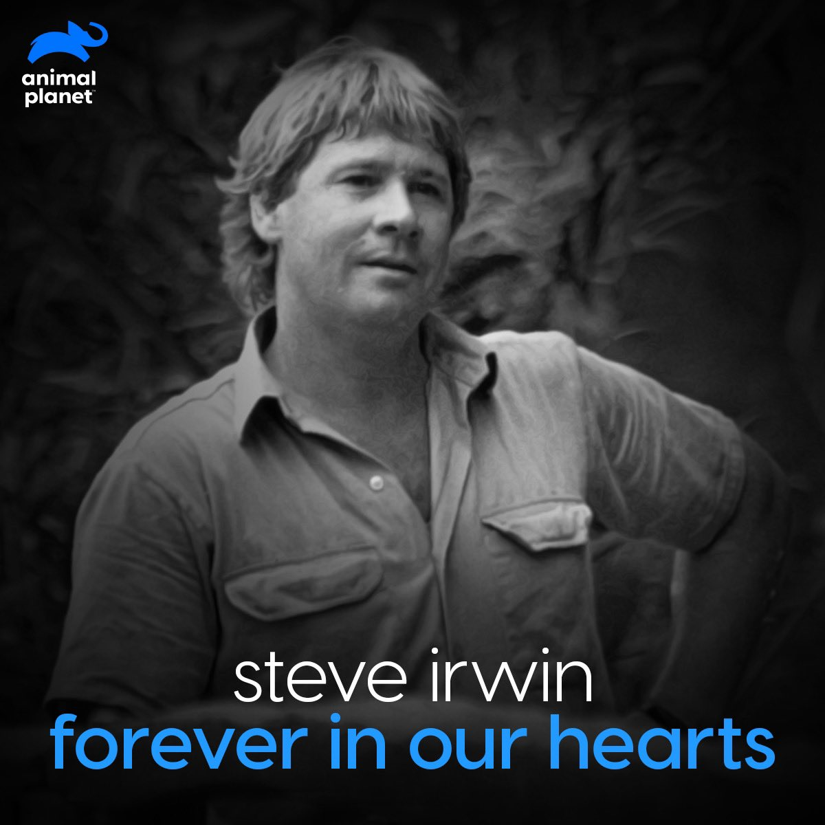 Animal Planet India On Twitter We Have Steve Irwin To Thank For The Fire Of Hope He Ignited In The Minds Of Wildlife Lovers We Are Forever Grateful For His Compassion Towards
