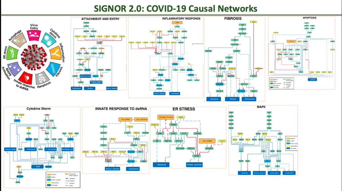 Today, we presented SIGNOR 2.0 database and our COVID-19 Causal Networks at BionetvisA at #ECCB2020@imexconsortium @intact_project @elixir_it @BiologiaUniRM2 @humantechnopole @CovidPathways @unitorvergata #ELIXIRvsCOVID19 #SARSCoV2 #COVID19 https://t.co/KAYvd8vRCY