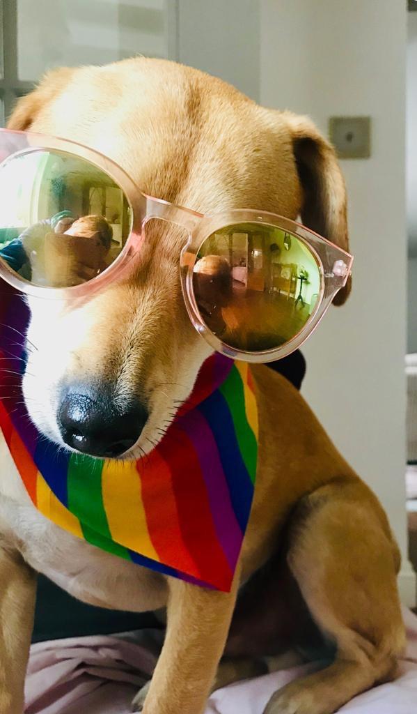 #PrideMonth2020 https://t.co/jFtOzjNjh9