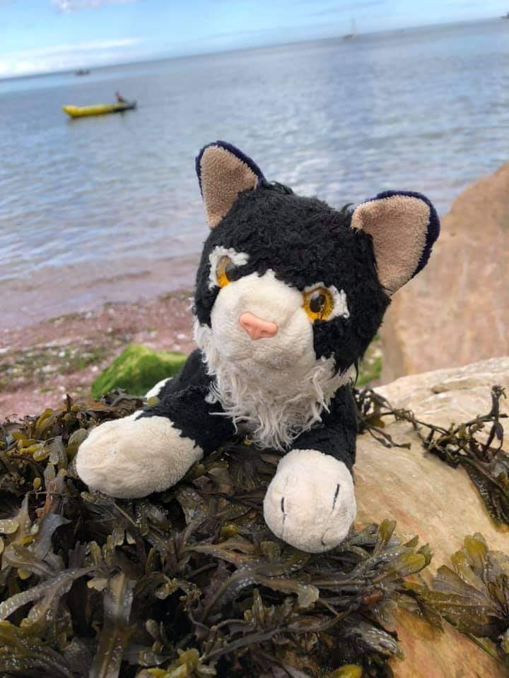 Anyone in Chippenham? A family friend has lost her daughter's incredibly well loved cuddly cat.  She was last seen on the benches near Superdrug.   If anyone has found her, please get in touch 💚 https://t.co/WoihP0F7sf