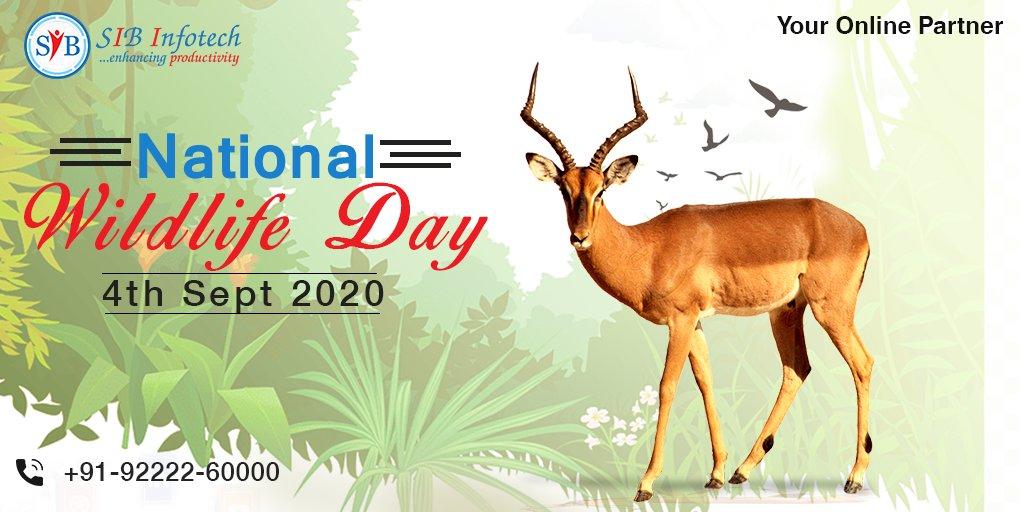 Happy #WorldWildlifeDay! Let us all celebrate our world's beautiful #wildlife  #wildlife  #WorldWildlifeDay #webapps #mobileapps #digitalmarketing #webdesign #uiux #websitedevelopment #websitedesign #webdevelopment #socialmedia #SEO https://t.co/gFirmTVDJo