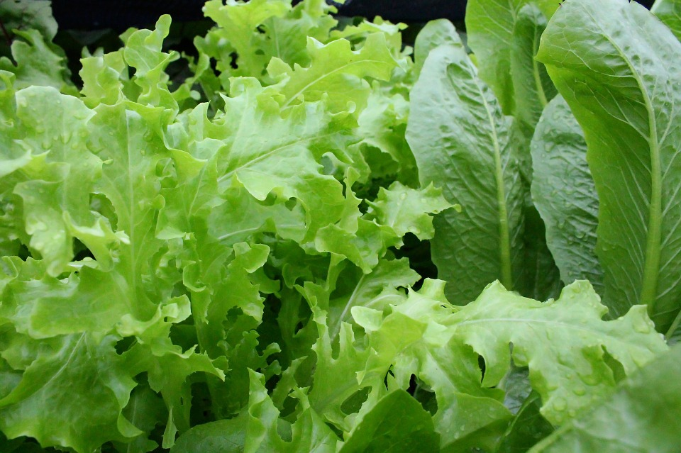 Don't Stress! Consume more #Healthy greens. Did you know that leafy greens can aid #Relaxation? https://t.co/RQ08r4wrR8