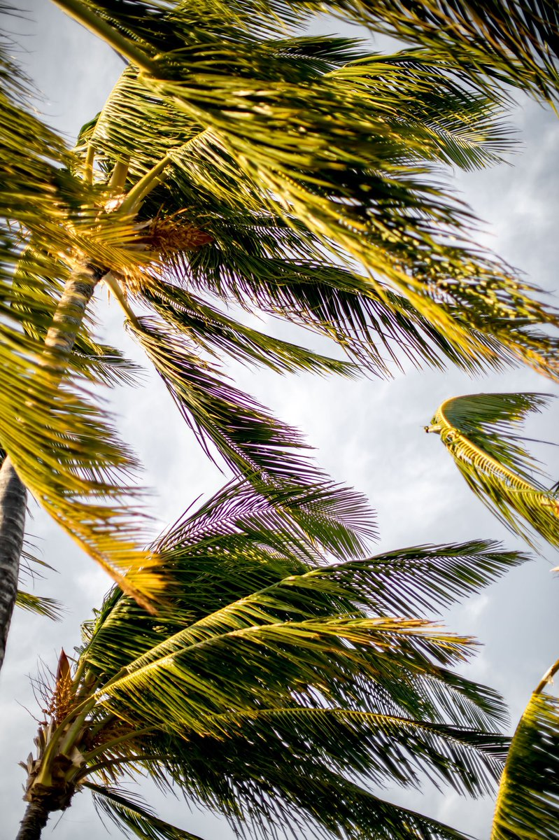 Leave your worries under the palm trees on this #AlohaFriday. 📸: @onepeakcreative https://t.co/0u2NgH7C7J