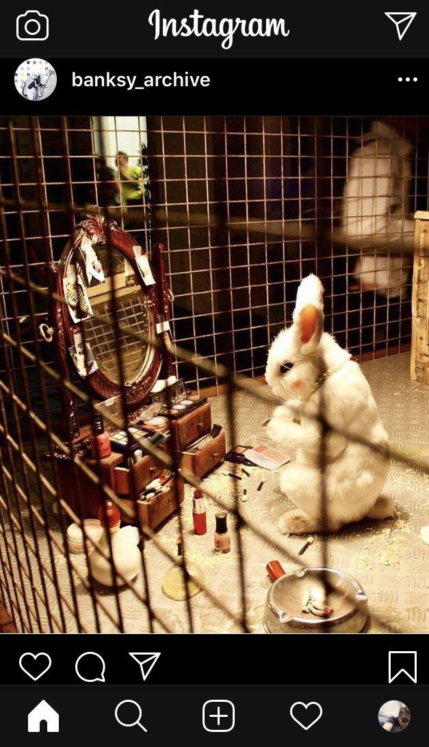 ウサギ アドレノクロム