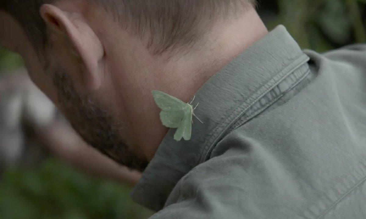 #Bees are vital for pollinating our crops but these unsung heroes do the nightshift! This Large Emerald #moth is hitching a lift on @jimmysfarm #JimmysBigBeeRescue on NOW @Channel4 @screenscots #SaveTheBees #moths #pollinators @PoMScheme https://t.co/UNHNYxm5pd