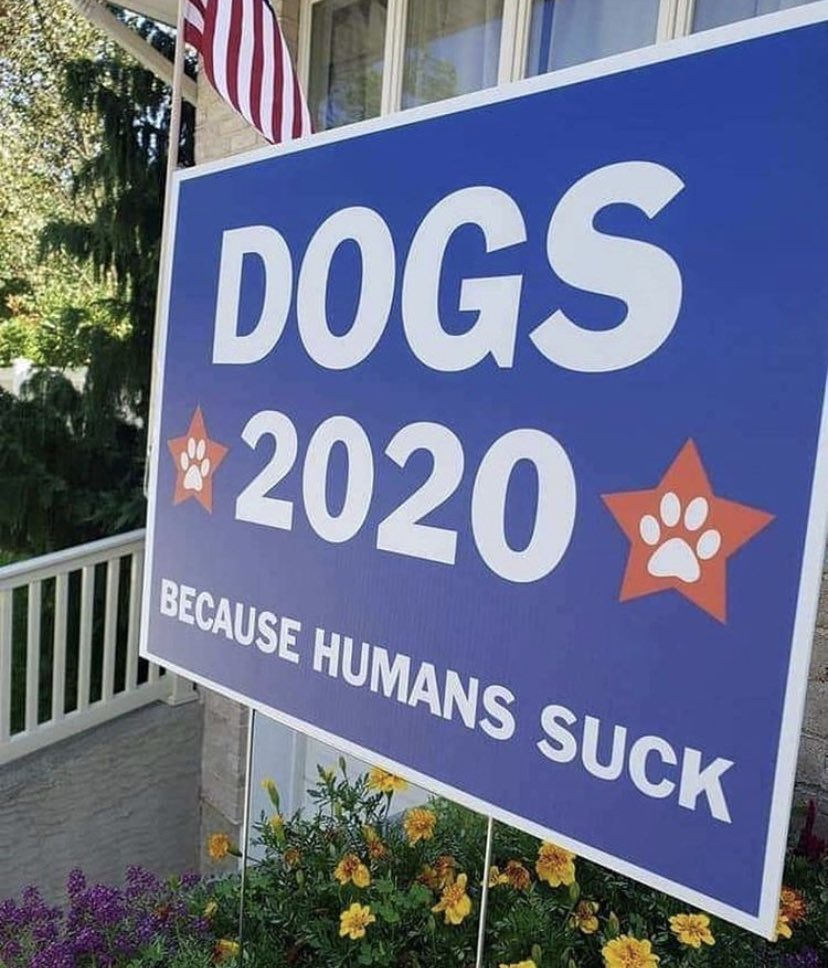 Dogs 2020, bruh... https://t.co/cDrkeQlQaH
