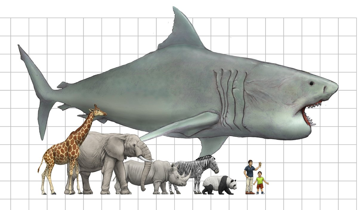 ナガスクジラ さ シロ 大き