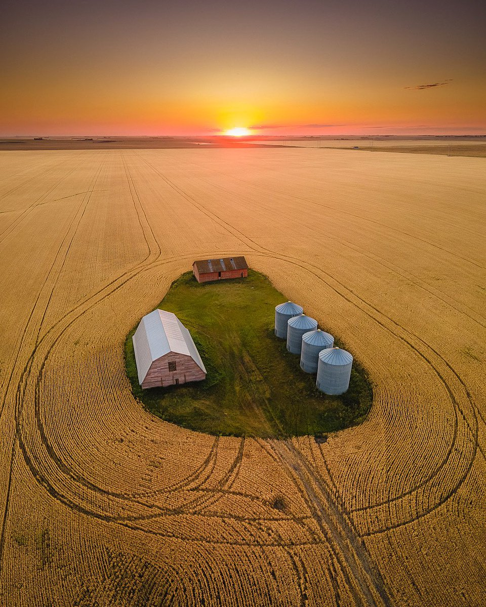 Prairie sea of gold in the harvest season. #harvest2020