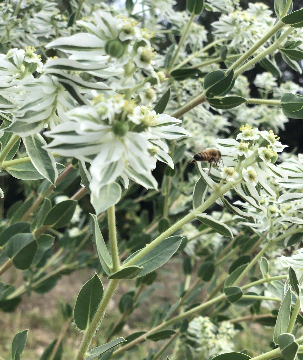 September flowers, busy bees...always in bloom, San Antonio https://t.co/lH1V8fHGw4