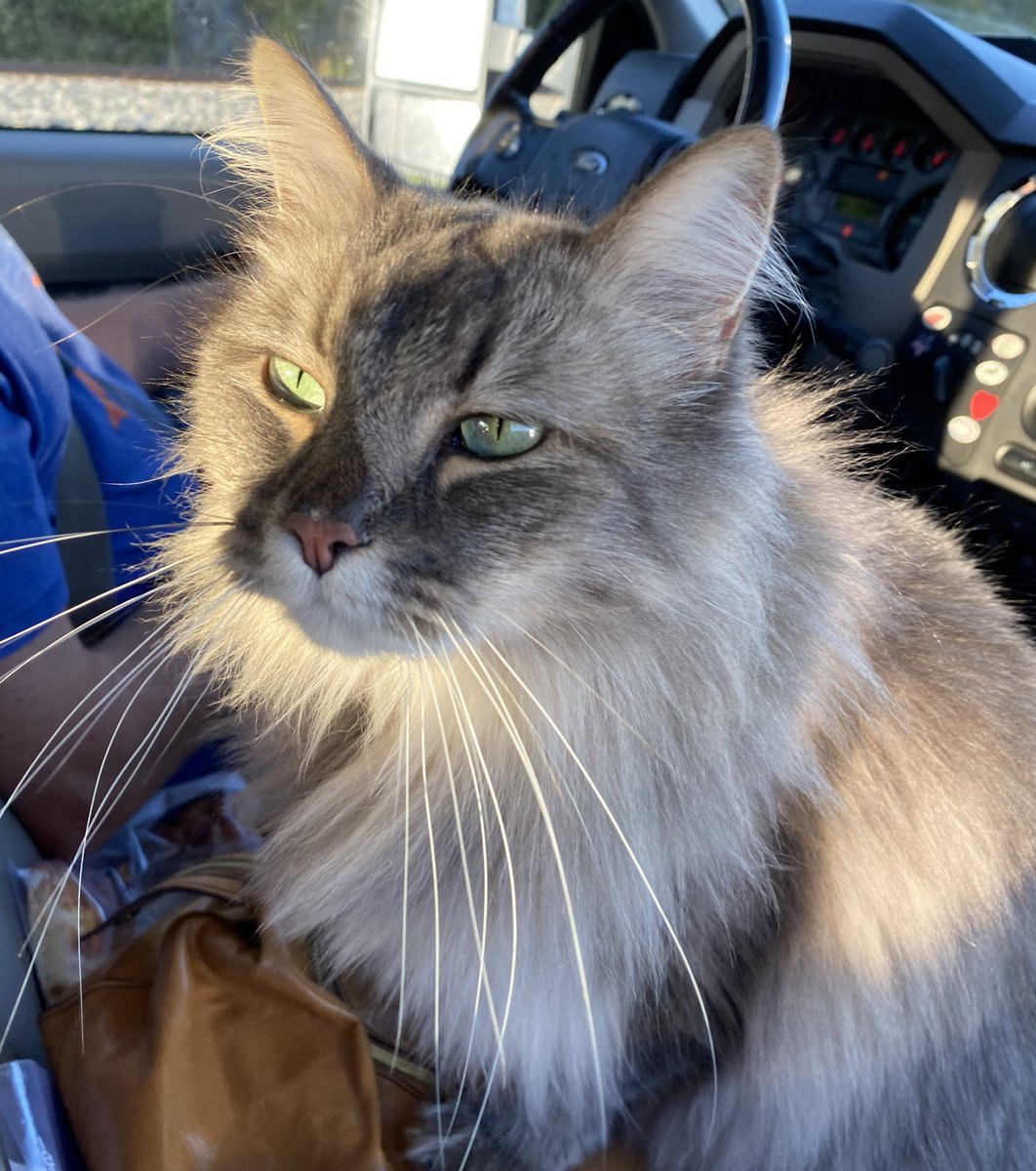 Anyone else love traveling in their hooman's vehicle?  I love it!  6 hour drive to our cabin for #LaborDayWeekend. Happy #Caturday everyone! 😻🐾😸 https://t.co/IWUXz8jaWv
