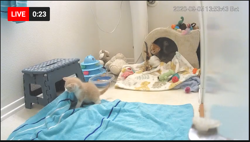 Rescue kittens in seek and destroy mode: LIVE STREAMING KITTEN CAM —> youtu.be/LuLPAlFXTKE