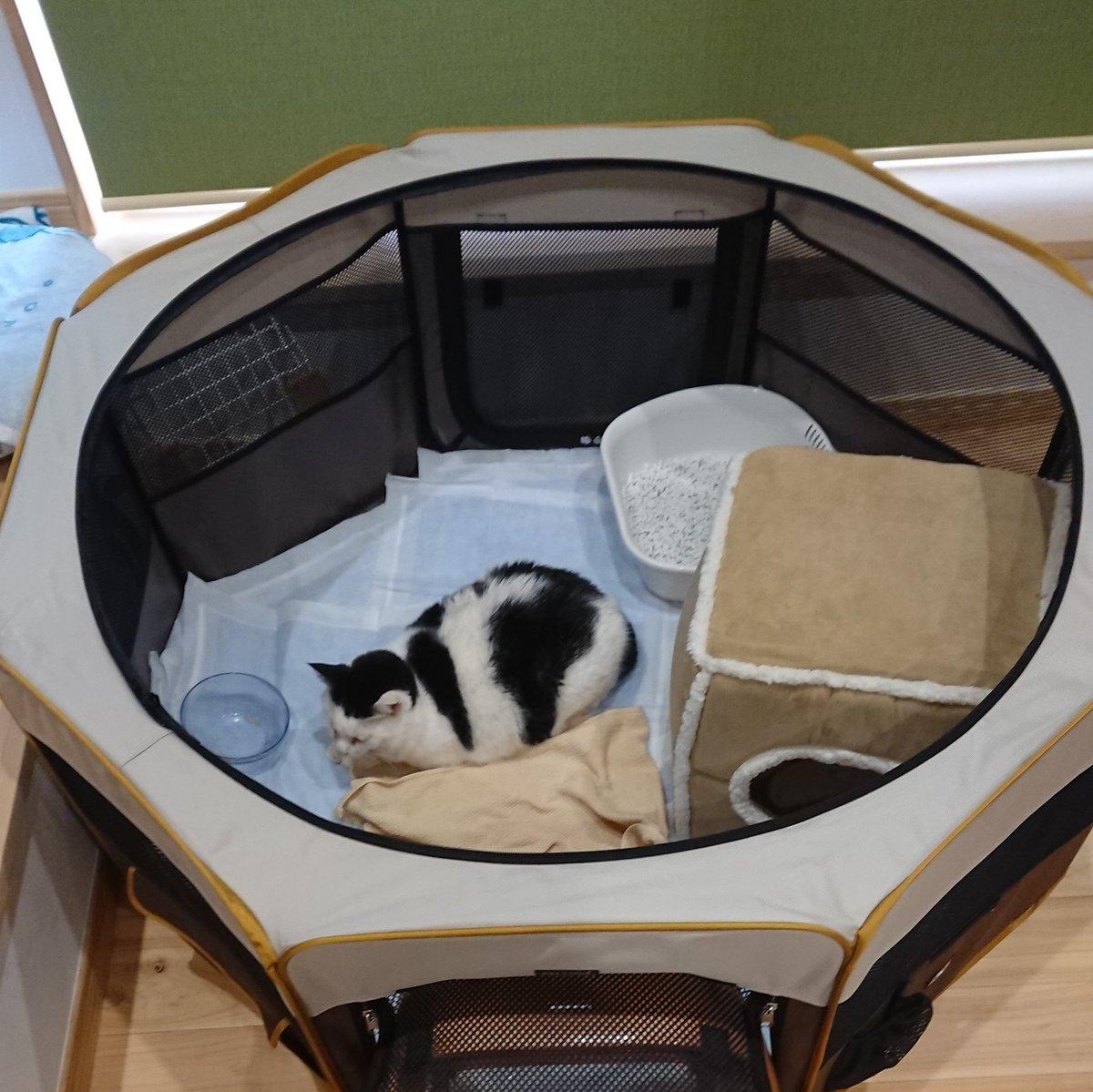 猫と一時避難するときや緊急時に重いケージを持って行き組み立てるのはむずかしいですが、この折り畳みサークルなら軽いし小さくなるのでおすすめです!天井と床部分はファスナーで付けはずしできます。 うちのはカインズで購入したLサイズのものですが、他のお店にも同じような物が売ってあります