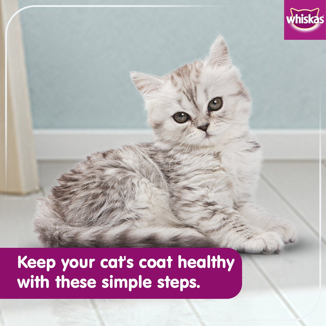 A balanced diet with ample nutrients is necessary to control shedding. Try protein-rich Whiskas meals along with the right grooming habits to ensure that your kitty has a healthy coat.  #Whiskas #WhiskasIndia #CatsOfInstagram #FeedTheirCuriosity #CatHealth #Cats #CatLovers https://t.co/Bek8UcC7F7