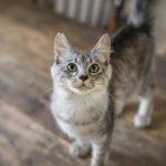 愛猫が何度もごはんを催促するときは?実はおなかが減っているのではなかった!