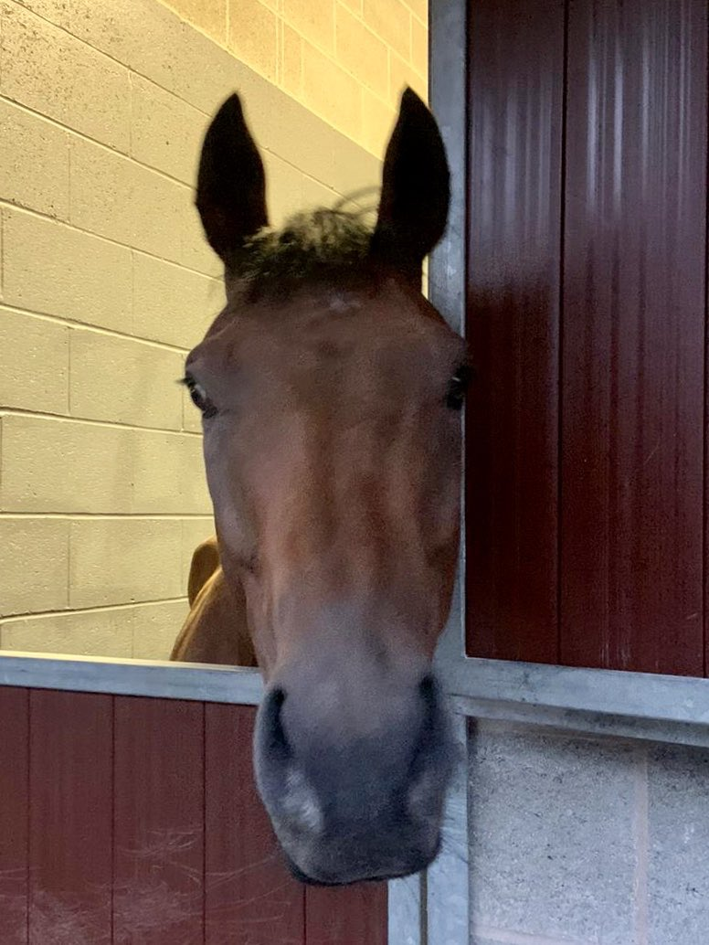 It's a busy Sunday for us!@JDeltaRacing's OrientalLilly, Jessie Allan,Primo's Comet,Sound Of Iona, Hillgrove Angel& @jimmyfyffe's Jorgie are @MusselburghRace @phillip_dennis & @rowan_49 ride& @JDeltaRacing's Firlinfeu(👇)are @yorkracecourse,THeard rides!