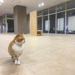 自由すぎる大学のいたるところに出現するネコが可愛い。