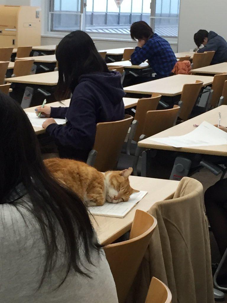 Kucing ini tidur di meja kelas kampus