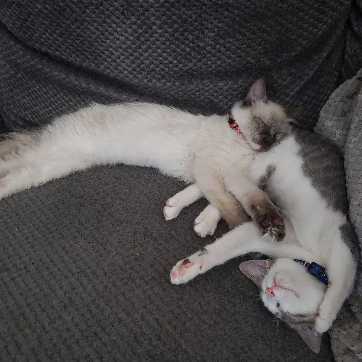 Pearl is a pretty good pillow- Marina https://t.co/UBRV2HEW2O
