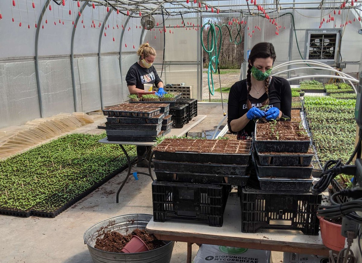 While Big Food Supply Chains Have Stalled Due to Lockdown, an Organic CSA Farm Has Risen to the Challenge https://t.co/8sE0jfJbEI #COVID19Pandemic #CSAFarm #FoodSupplyChains #OrganicCSA https://t.co/uGxEXifTIf