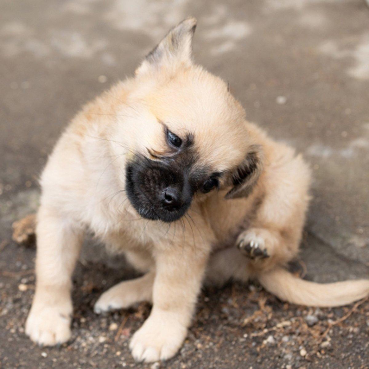 かわいいわんちゃん♪ #ハニーペット #HONEYPET #honeypet #犬 #ふわもこ部 #愛犬 #わんこ #いぬすたぐらむ #いぬ #ペット #犬のいる暮らし #ワンコ #イヌ #いぬのきもち #こいぬ #dog #dogsofinstagram #puppy #pet  #instagood #follow #followme https://t.co/suSJ6fJnLC