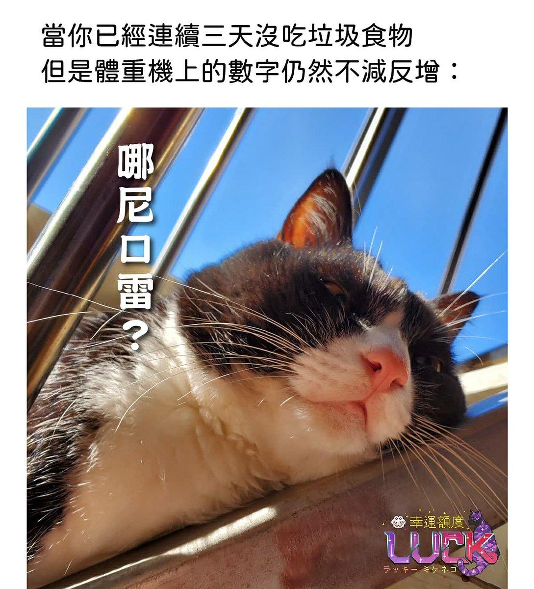 三日間おやつ食べないのに 体重計の数字は減らずに増えた… #めっちゃショック😱 #幸運額度 #cat #taiwan #猫 #猫好きさんと繋がりたい #猫好き #猫写真 #猫のいる生活 #インスタ映え #貓 #台灣 #台湾 #REO #レオ #ハチワレ #ハチワレ猫 #賓士貓 #Tuxedo #雷歐 https://t.co/flfWUFNitF