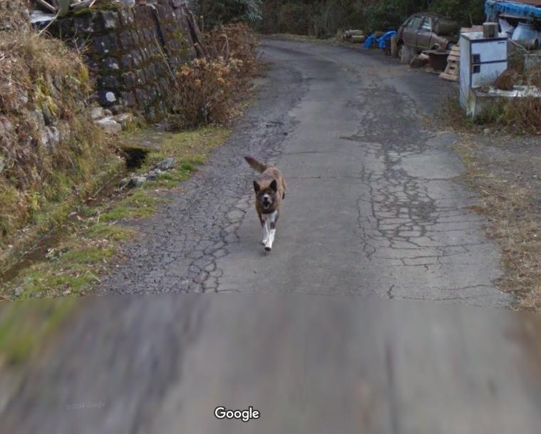發現到一隻在全力追著Google Map車子的狗狗 EhTu2HSU4AAm2oH