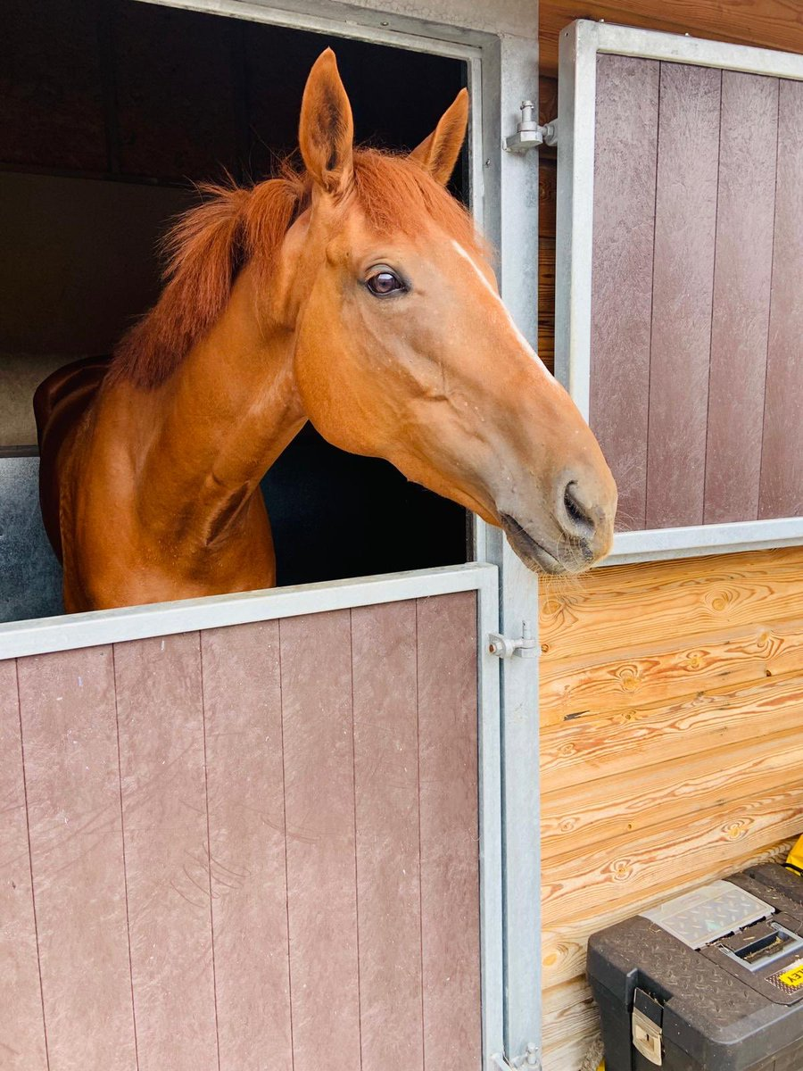 Rock Rebel's(pictured) having his 1st day at school @PerthRacecourse today & Walkin In The Rain's hoping to go one better than his game 2nd at the track, champ jock Brian Hughes rides!