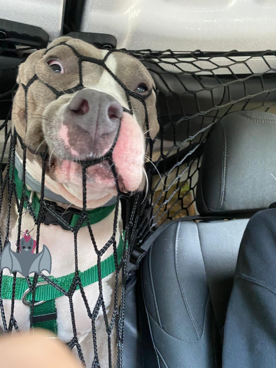 My sister got a net to keep the dog in the back seat but she does not accept https://t.co/LKFlOqBSBL