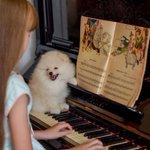 ピアノに関わるポメラニアン達??みんないい顔してる!