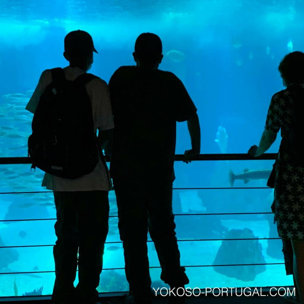 test ツイッターメディア - 見応えのあるリスボン水族館。ネイチャーアクアリスト、天野 尚氏の作品も展示中です。 #ポルトガル #リスボン #水族館 https://t.co/PkdKtPXuY7