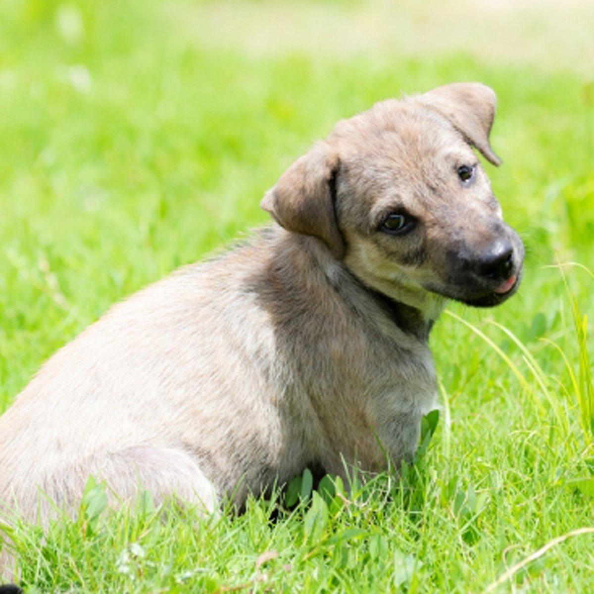かわいいわんちゃん♪ #ハニーペット #HONEYPET #honeypet #犬 #ふわもこ部 #愛犬 #わんこ #いぬすたぐらむ #いぬ #ペット #犬のいる暮らし #ワンコ #イヌ #いぬのきもち #こいぬ #dog #dogsofinstagram #puppy #pet  #instagood #follow #followme https://t.co/dQT1JyaxlG
