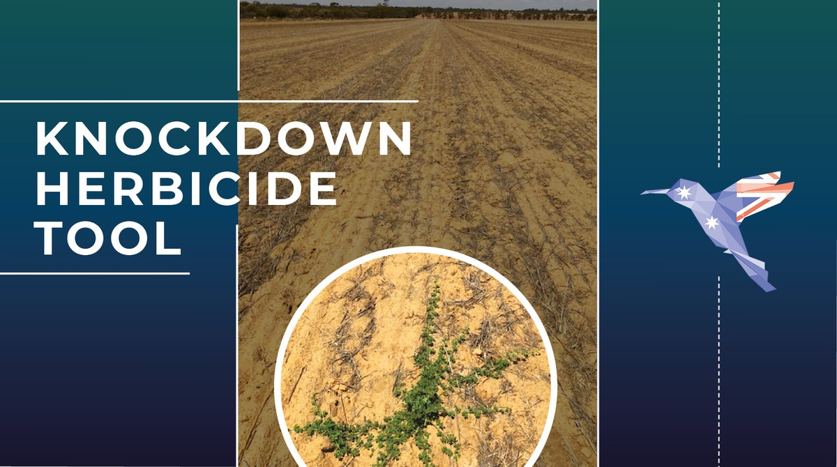 We've been in Bonnie Rock in the Australian #Wheatbelt region: our #UAV analytics have been identifying weeds & mapping them into 5m x 5m prescription maps that can easily integrate with sprayers & control boxes.  See where the weeds are BEFORE the sprayer hits the ground! https://t.co/mBLVFR1sk2