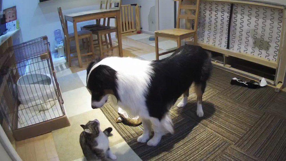 お留守番中のうちの犬猫、絶対会話してると思う