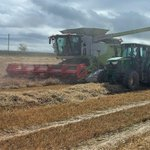 Image for the Tweet beginning: Specialist high nitrogen barley #Fairing