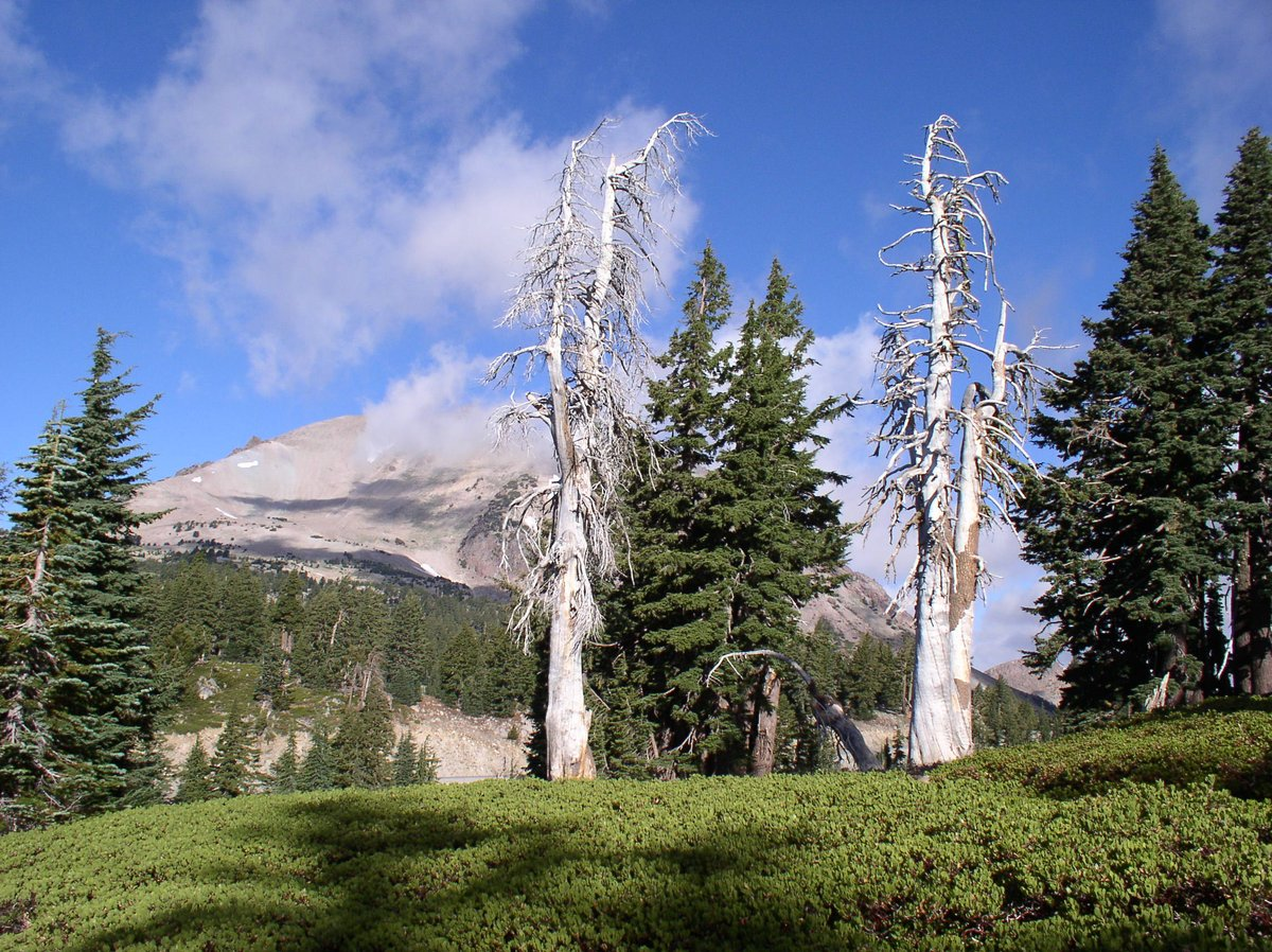Tree_Mortality photo