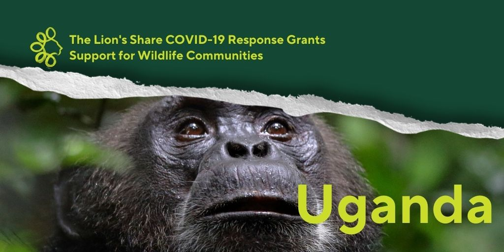 #TheLionsShare is excited to announce a #conservation grant in chimpanzee and tree climbing lion habitat of #Uganda! These iconic species are at risk of increased #poaching brought on by the recent loss local incomes. This grant supports community beekeeping and honey products. https://t.co/mPNZYHFrsB