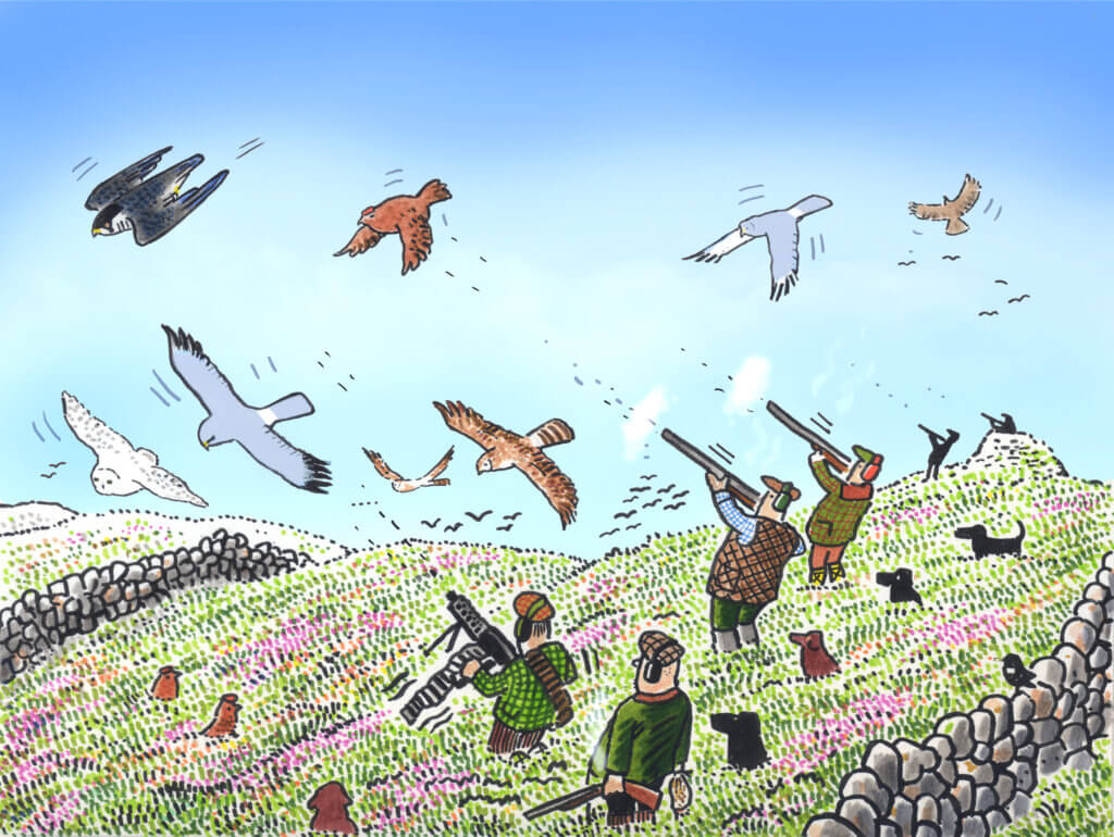 Giving grouse shooting an easy ride on COVID precautions is just latest example of government wilful blindness to problems of driven grouse shooting markavery.info/2020/09/15/dri… Crime against protected wildlife @Peston @ChrisGPackham @paulwaugh @domdyer70 @MilesKing10