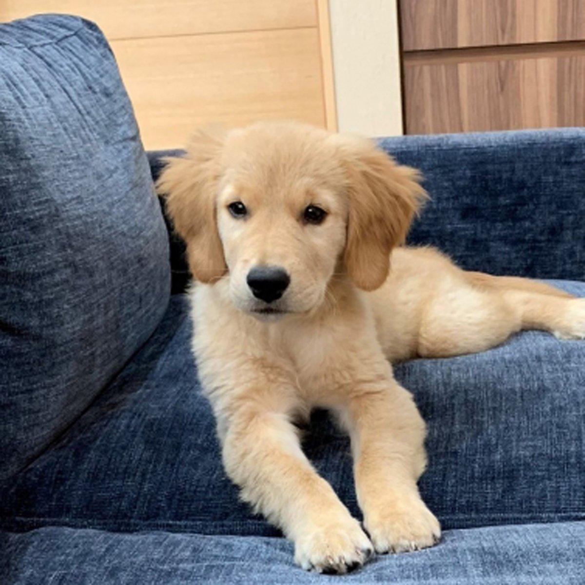 かわいいわんちゃん♪ #ハニーペット #HONEYPET #honeypet #犬 #ふわもこ部 #愛犬 #わんこ #いぬすたぐらむ #いぬ #ペット #犬のいる暮らし #ワンコ #イヌ #いぬのきもち #こいぬ #dog #dogsofinstagram #puppy #pet  #instagood #follow #followme https://t.co/cGU0PPOkfv