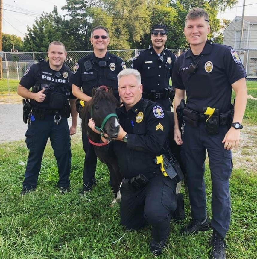 """Sun 4th Division responded to a horse in the road.3 year-old """"Tennessee"""" fled the scene but officers were able to safely contain him. Another horse race in the books.  #LMPD #PonyPolice #4thDivisionJockeySquad #PonyPursuit #TrottinOnTaylorBlvd #RogueRider #MiniPony https://t.co/oBQEOoK1qt"""