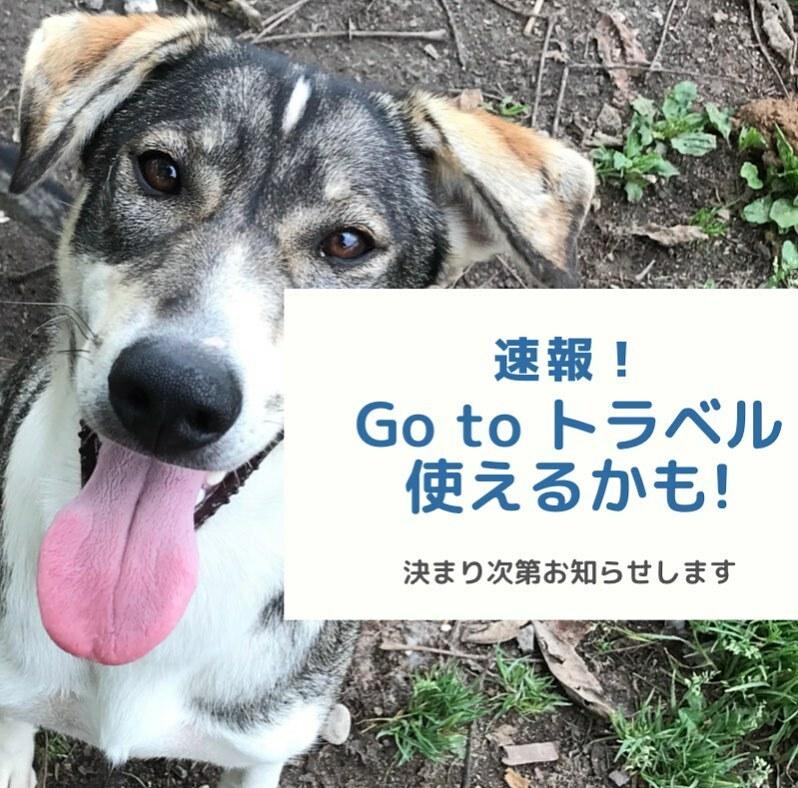 決まり次第、正式にお知らせします! #犬ぞり #マッシングワークス #冬の北海道 #lovehokkaido https://t.co/FnGSYzhVSc https://t.co/xNUo17AUn2