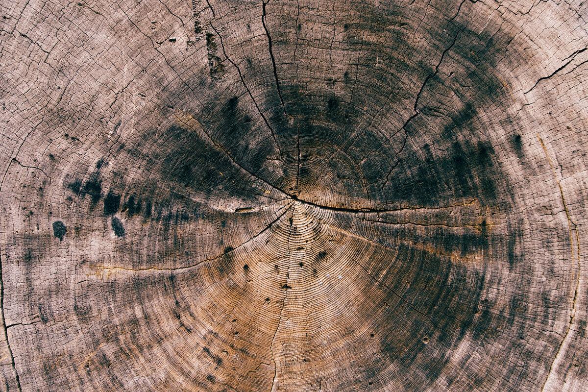 WOOD-DESIGN: duurzaam design met houtafval | Het project WOOD-DESIGN wil houtverwerkende bedrijven en designers dichter bij elkaar brengen in een tweejarig traject. Om zo tot inspirerende realisaties te komen voor de volledige sector!   https://t.co/75QBDwJ0Ey https://t.co/enmWmdH7Da