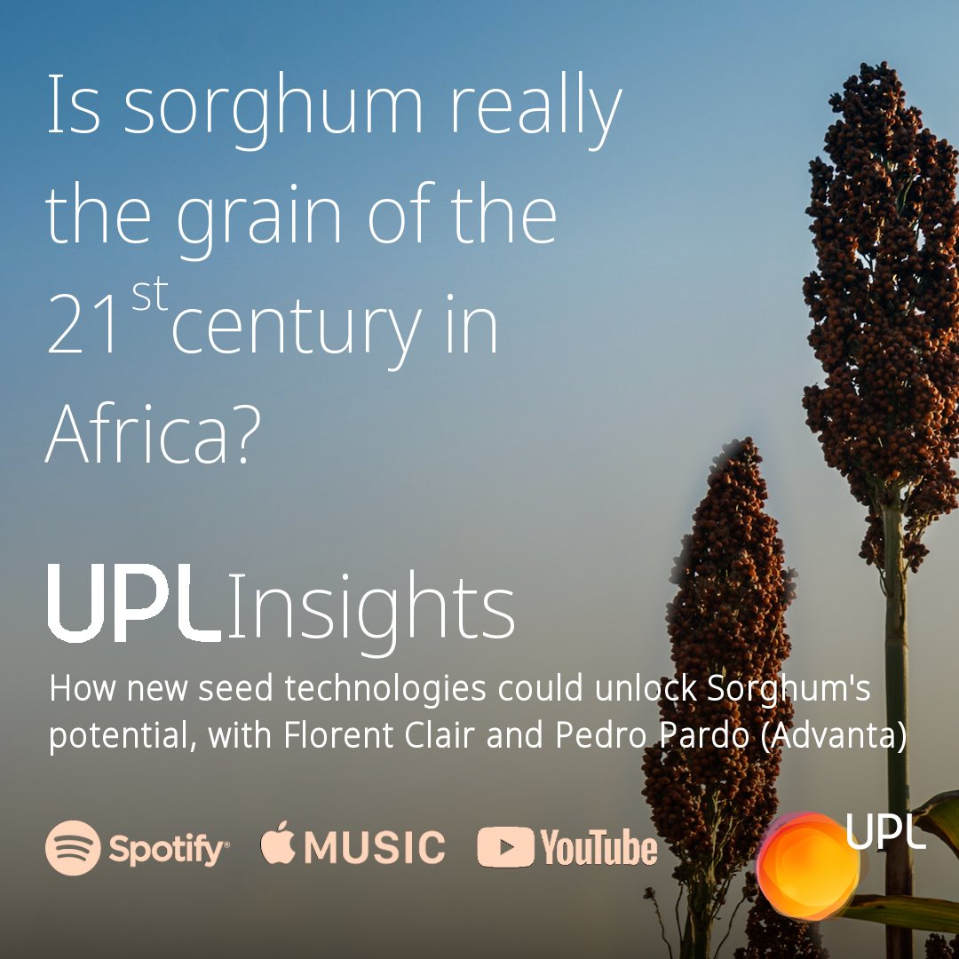 In this episode of #UPLInsights, we're asking if #technologies developed in Argentina could offer a new route to #foodsecurity across the #African Continent. Florent Clair is joined by Pedro Pardo to discuss the work that UPL is leading with Sorghum. https://t.co/FEmY3eiO4P https://t.co/DAC4tGh61e