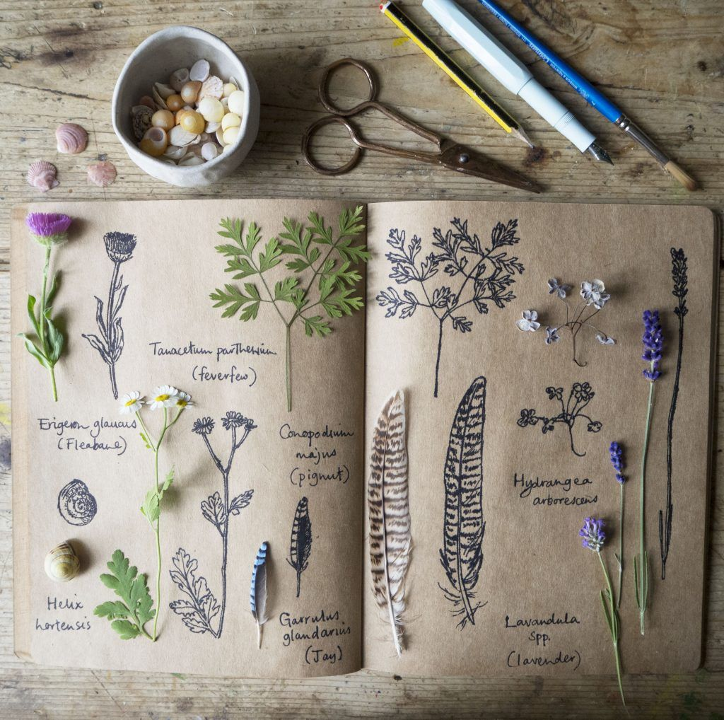 The botanical journal of Emma Mitchell, designer-maker, naturalist, illustrator and author of a book called Making Winter: A Creative Guide for Surviving the Winter Months #womensart