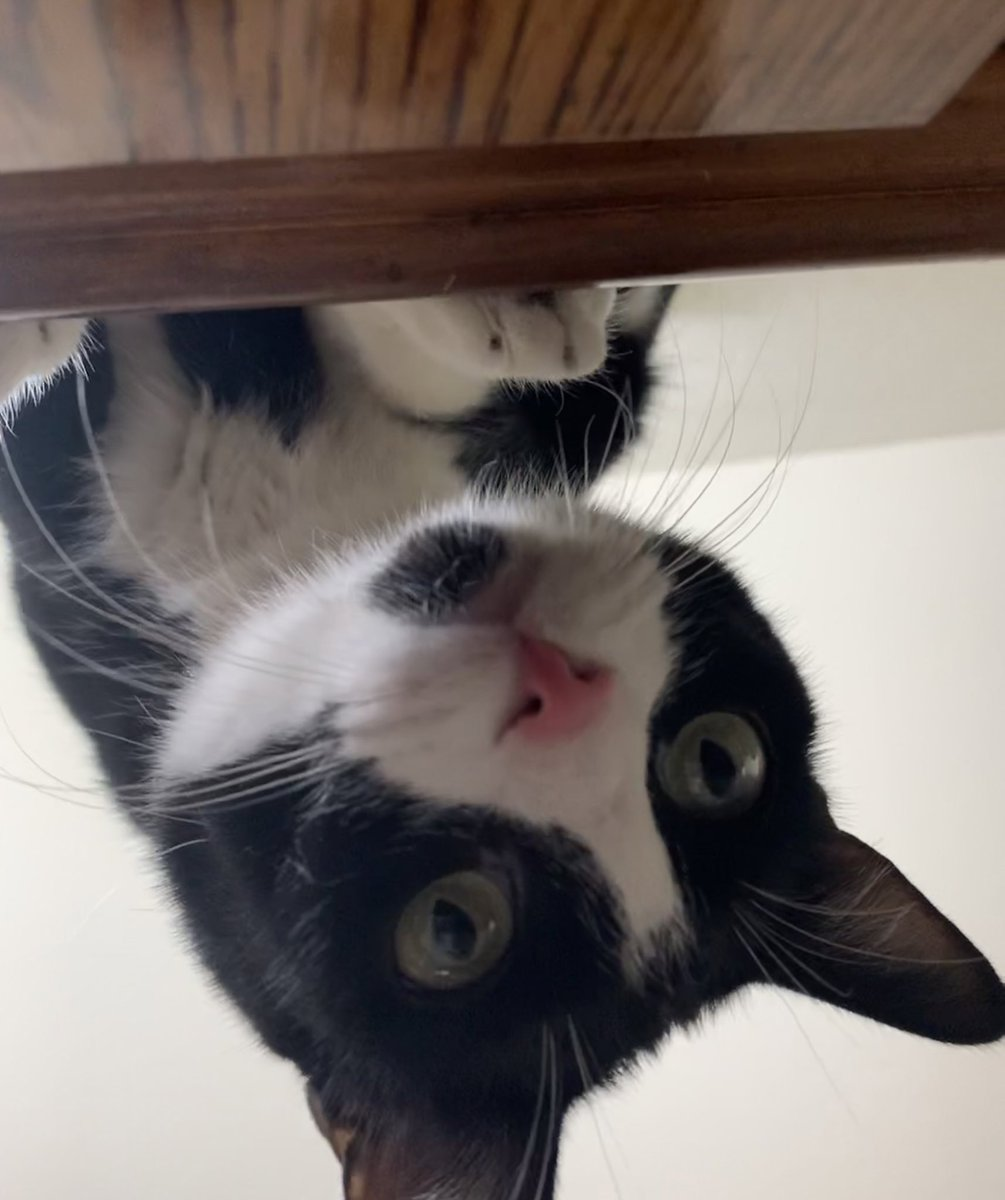 Sometimes you need to look at life from a different perspective Happy #whiskerswednesday !! https://t.co/6DVNmX7iHD